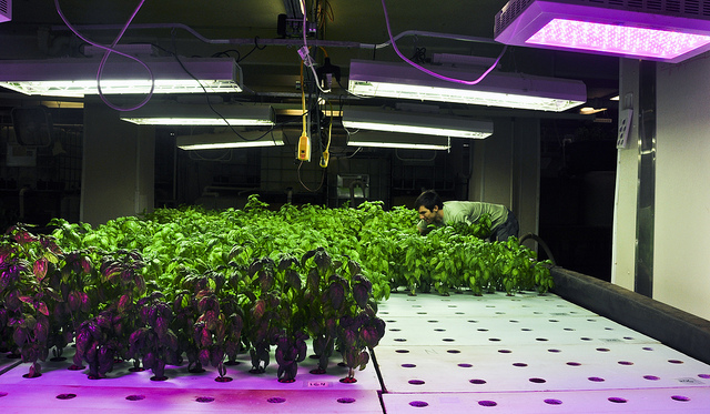 """Indoor agriculture at <a href=""""http://plantchicago.org/tour/"""">The Plant</a>, a Chicago facility dedicated to """"circular economies of food production, energy conservation, and material reuse."""""""