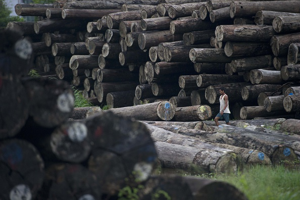 A worker walks past a pile of logs at a holding area along the Yangon river in Yangon on July 23, 2015.