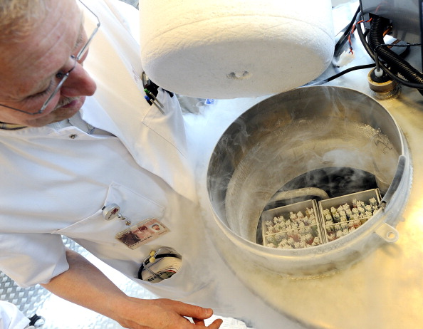 A technician opens a vessel containing women's frozen egg cells on April 6, 2011 in Amsterdam.