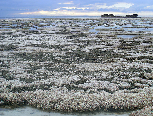 A major coral bleaching event took place in this part of the Great Barrier Reef in Australia.