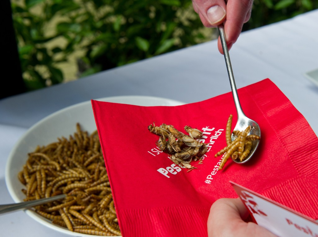 A patron is served roasted crickets and mealworms on June 4, 2014 during a global Pestaurant event sponsored by Ehrlich Pest Control, held at the Occidental Restaurant in Washington, DC.