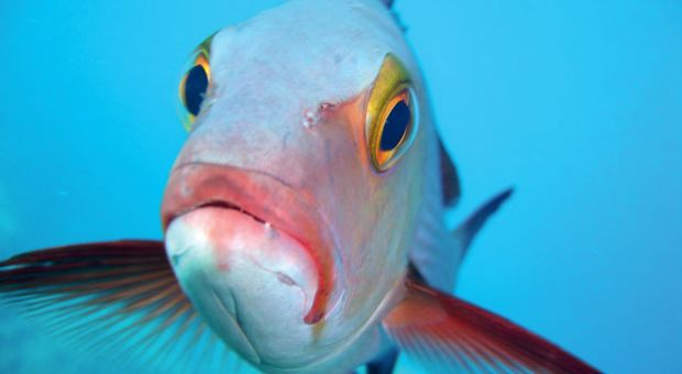 Many of the reef fish Gregory Stone and his team photographed may never have seen a diver before, let alone a camera.