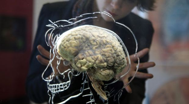 Nicole Briggs looks at a real human brain being displayed as part of new exhibition at the @Bristol attraction on March 8, 2011 in Bristol, England.