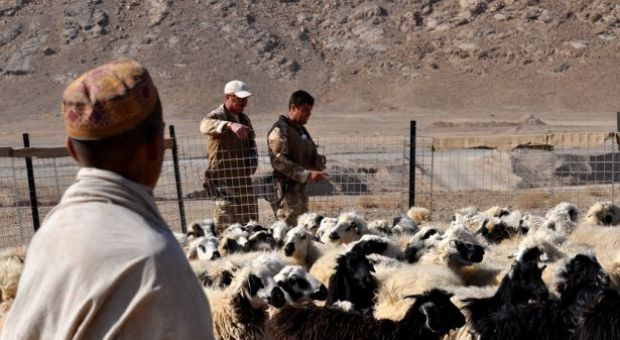 A pioneering vet clinic in Taliban country (Afghanistan)