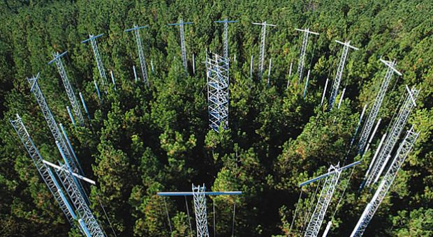 CO2 enrichment in Loblolly Pine forests at Duke University