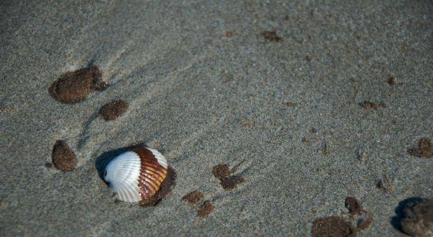 Beach at Grand Isle, Louisiana