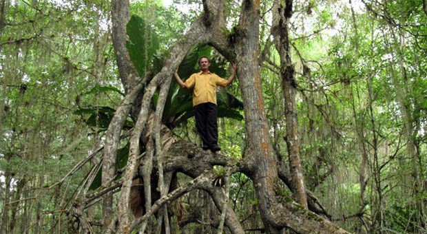 Warne in a Mangrove forest